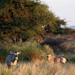 NAMIBIA LUXURY HUNT VOIGTLAND-ORYX